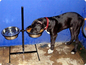 Adjustable elevated dog feeder growing with a Dane pup.