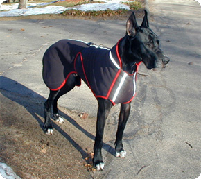 Early design black and red Great Dane coat.