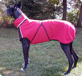 A Great Dane coat with perfect fit.