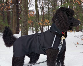 Standard Poodle coat black with black trim.